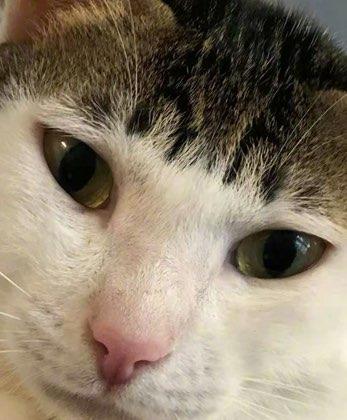 猫咪真可爱